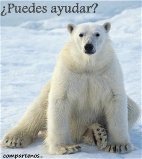 Adaptacion del oso polar » OSOPOLARPEDIA