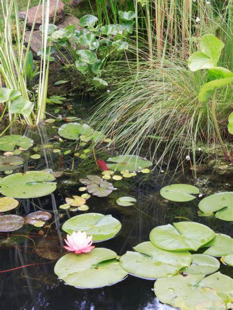 Adding Plants to Your Garden Pond | HGTV