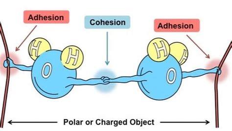 Adhesion vs. Cohesion: Cuadros comparativos   Cuadros ...