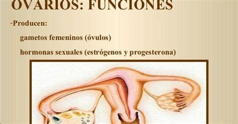 Adiós Quistes de Ovario: Función de los Ovarios. Cuál es ...