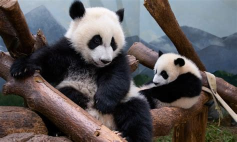 Admission for One Adult or Child - Zoo Atlanta | Groupon