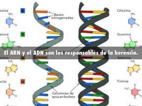 ADN by Misael Guzman