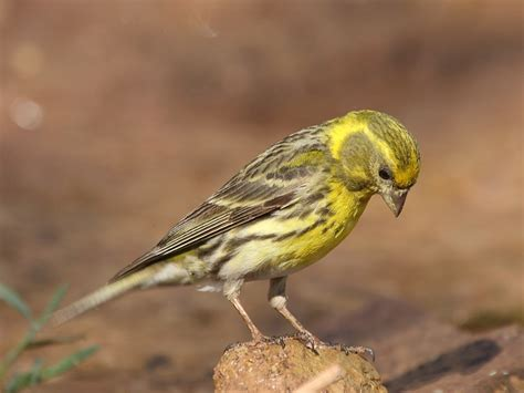 Adri_Mallorca: Pájaros silvestres