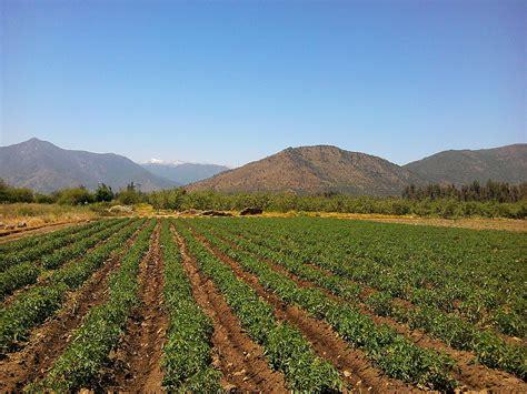 Agricultura en Chile   Wikipedia, la enciclopedia libre
