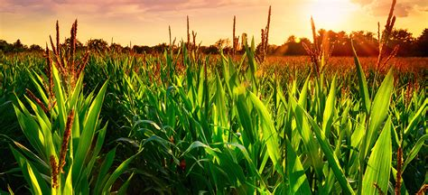 Agricultural Commodities Products