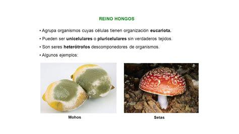 Agrupa organismos cuyas células tienen organización ...