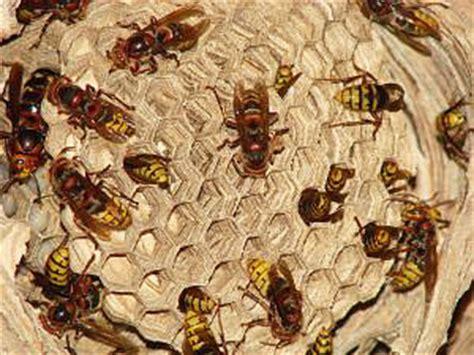 ¿Ahuyentar o matar abejas? | Urbeco
