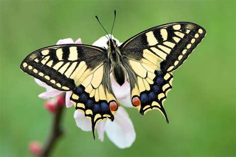 Alas de mariposa   Loca, enamorada y poeta