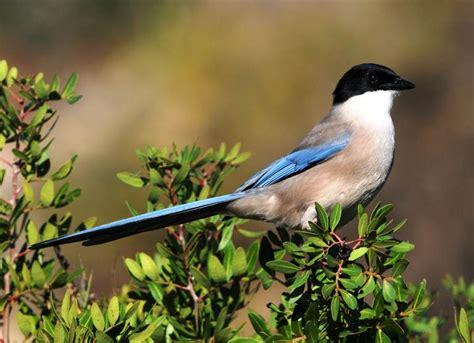 Algarve Wildlife home page
