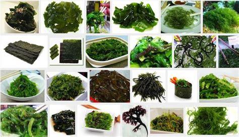 Algunos de los beneficios de las algas | Blog de farmacia