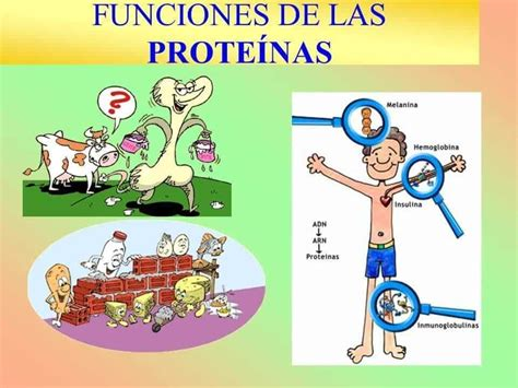 Alimentos ricos en proteínas, la lista definitiva