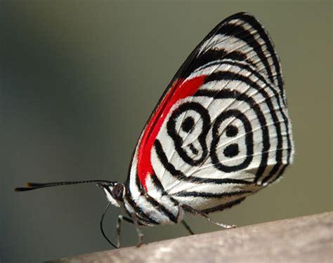 ALLPE Medio Ambiente Blog Medioambiente.org : La Mariposa ...