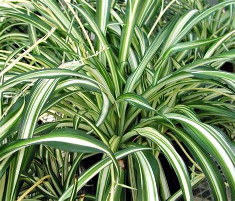 Aloe, Aloe! 10 Great Air Purifying Plants - Eluxe Magazine