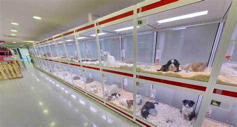 Alquiler de perros en Japón... ¿Moral o inmoral ...