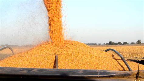 Alzas en soja y maíz, bajas en trigo, en Bolsa de Chicago ...