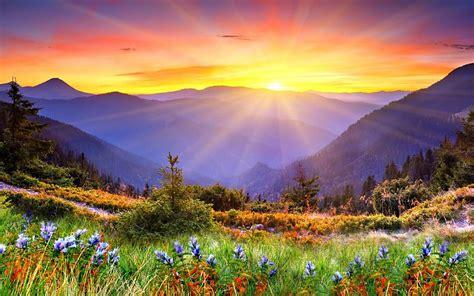 amanecer naturaleza flores paisaje fondos de pantalla gratis