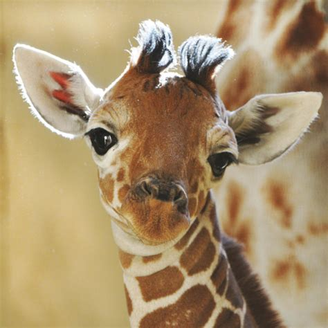 Amazing Animals Pictures: Lovely, tender and cute: The ...