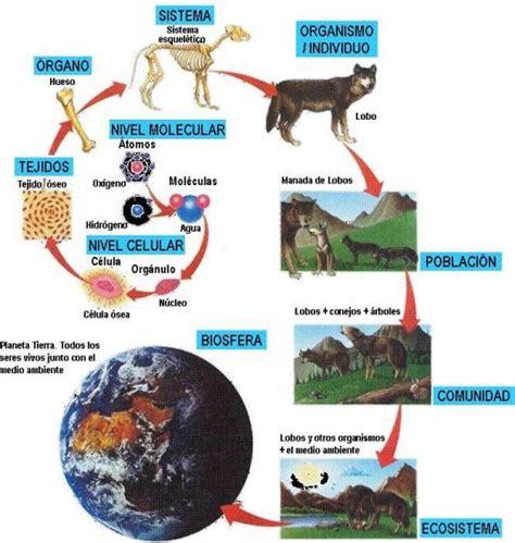 Ámbito Científico Tecnológico IES Cuenca Minera: LA BIOSFERA