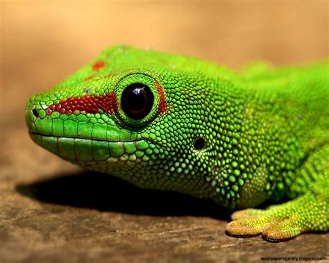 Amphibians And Reptiles | Wallpapers Gallery