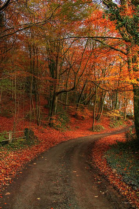 An English Autumn Photograph by Sarah Broadmeadow Thomas