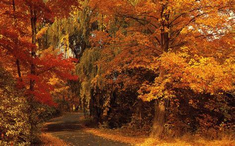 Ana´s English classes: October 2014