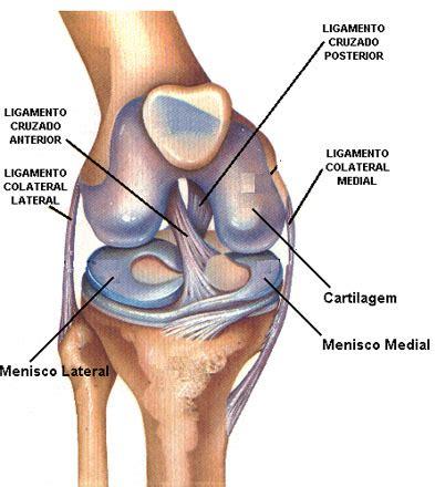Anatomía de la rodilla | lesiones deportivas y fisioterapia