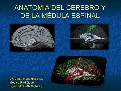 Anatomía del cerebro y médula espinal