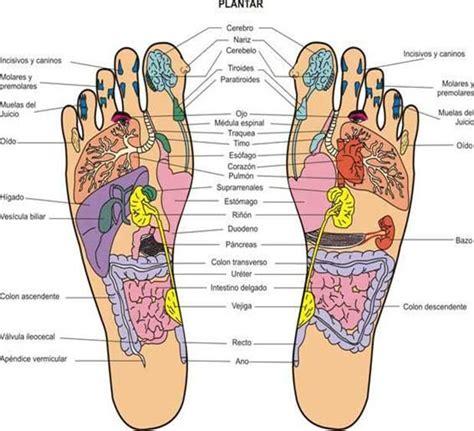 Anatomía humana: órganos internos - Buscar con Google ...