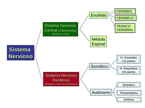 Anatomía sistema nervioso central