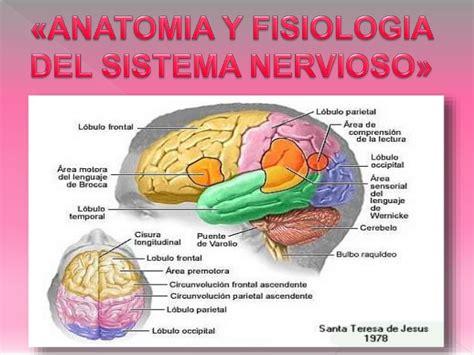 ANATOMÍA Y FISIOLOGÍA DEL SISTEMA NERVIOSO  NEUROLOGÍA