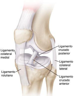 anatomiaui1 | Blog Anatomia - Cadera y Rodilla | Página 2