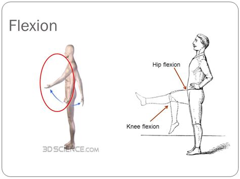 Anatomical Directions & Movements - ppt video online download