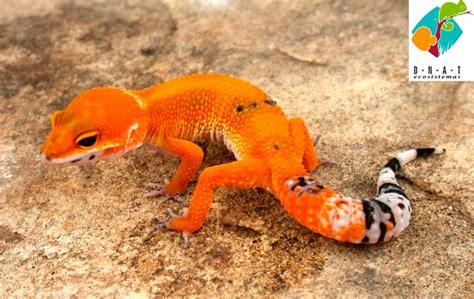 Anfibios y Reptiles. Terrario. Rana. Sapo. Serpiente.