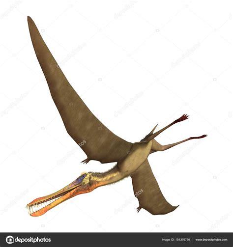 Anhanguera de pterodáctilo renderizado 3D sobre blanco ...