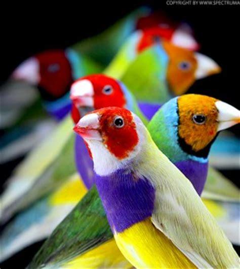 Anillado en aves exóticas | Infoexóticos