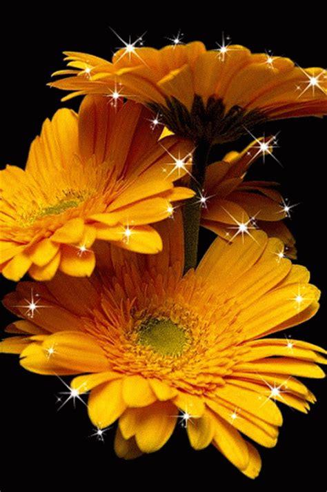 Animaciones Con Rosas O Flores Con Brillo Y Destello
