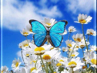 Animados gif de flores y mariposas.