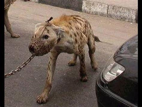 Animais Selvagens de Estimação na África   YouTube