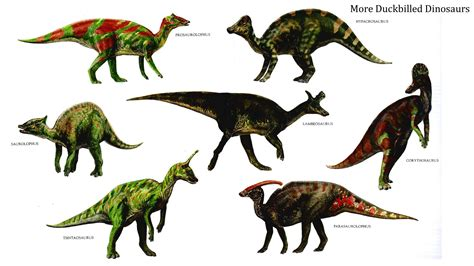 animal creature moodboard | Creative Digital Media   Josh ...