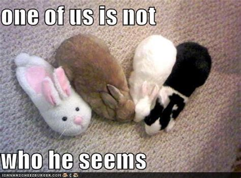 Animal humor funny animals | NanoPics Pictures