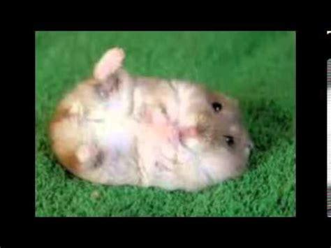 Animales bonitos y tiernos   YouTube