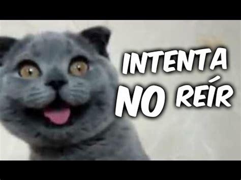 ANIMALES CHISTOSOS Y GRACIOSOS #02 | Vídeos de Risa de ...