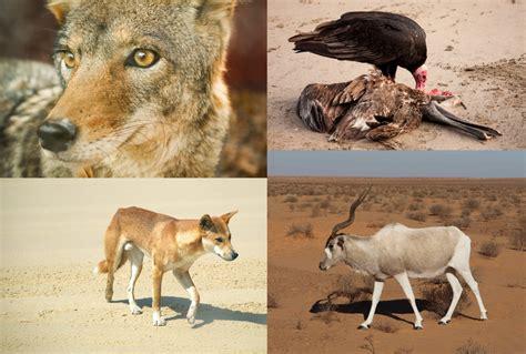 Animales del Desierto【 Plantas, Vegetación, Sahara ...