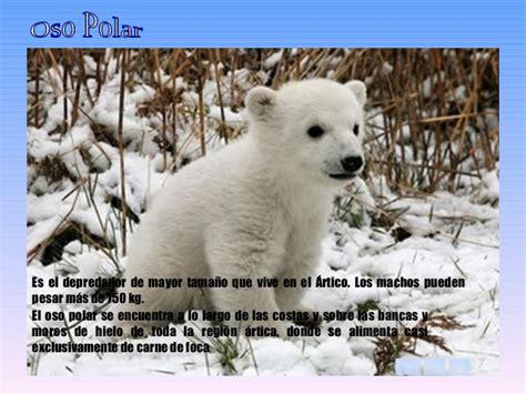 Animales del Frío