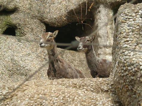 Animales, del Zoo de Barcelona | fotos de Animales