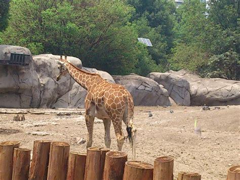 Animales en el zoológico de Chapultepec | fabiandeita
