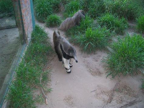 animales: fotografía de Zoo de Córdoba, Córdoba   TripAdvisor