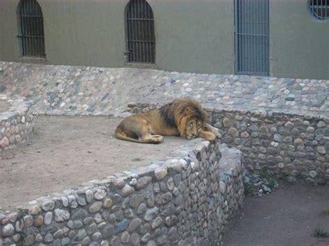animales: fotografía de Zoo de Córdoba, Córdoba - TripAdvisor