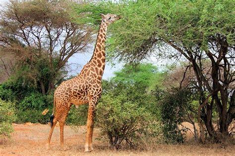 Animales herbívoros: Ejemplos y características ...