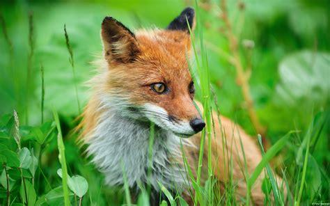 Animales impresionantes en HD - Imágenes - Taringa!